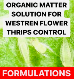 ORGANIC MATTER SOLUTION FOR WESTREN FLOWER THRIPS CONTROL FORMULATIONS AND PRODUCTION PROCESS